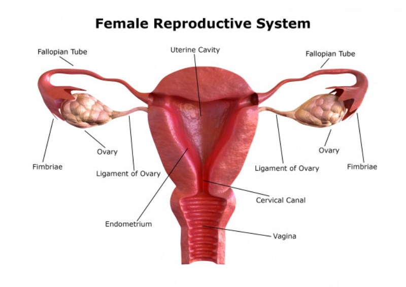 Improving Uterine Lining for IVF Preparation